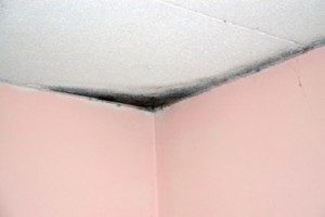 avoid_mold_in_your_home
